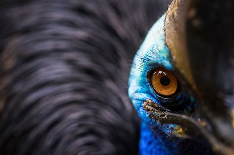 The Best 100 Photographs Selected by National Geographic ...