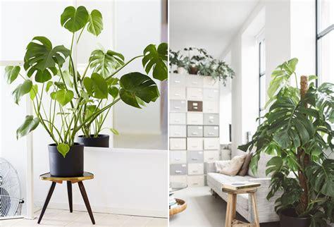 bureau exotique une plante exotique oui mais laquelle mademoiselle
