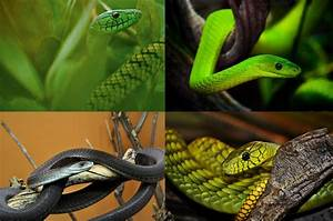 Interesting facts about mambas | Just Fun Facts