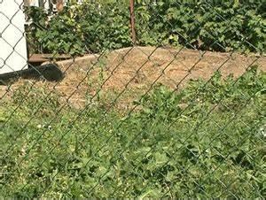 Hund Im Garten Vergraben : schwere tierqu lerei in unterk rnten oesterreich ~ Lizthompson.info Haus und Dekorationen