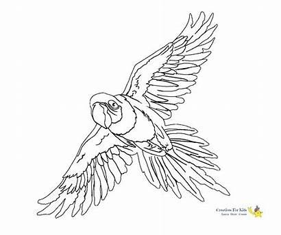 Parrot Coloring Pages Flying