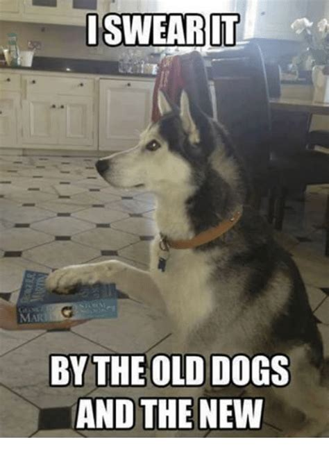 New Dog Meme - iswearit mari by the old dogs and the new dogs meme on sizzle
