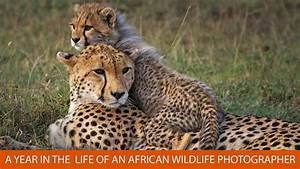 A Year In The Life Of An African Wildlife Photographer