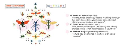 Top 3 MOST PAINFUL Insect Stings in the World — Steemkr