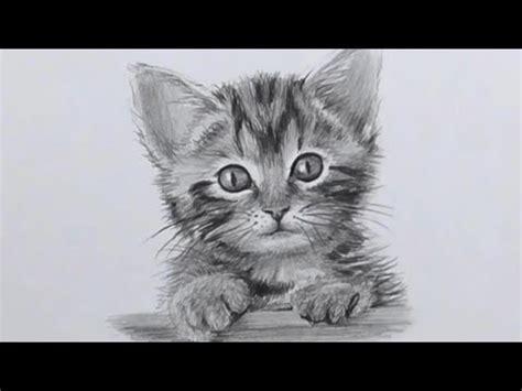 comment dessiner un chaton