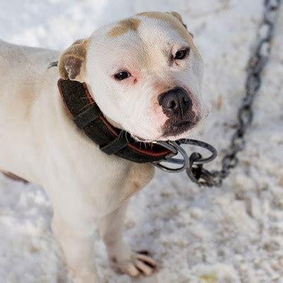 fighting animal cruelty  neglect  humane society