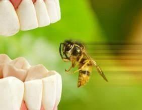Was Tun Gegen Wespen Im Kirschlorbeer : wespen vertreiben und bek mpfen tipps zur wespenbek mpfung ~ Lizthompson.info Haus und Dekorationen
