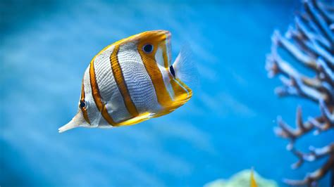 Free Animated Fish Wallpaper Windows 7 - animated fish wallpaper animated wallpaper windows 7