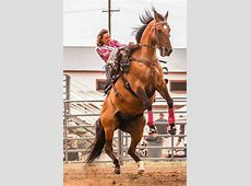 Rodeo queen starts off rodeo with exciting ride State