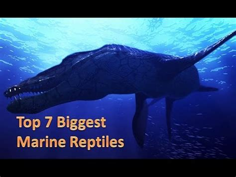Top 7 Biggest Marine Reptiles Youtube