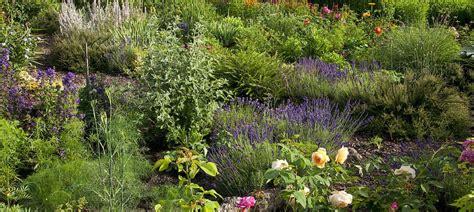 bepflanzung um terrasse