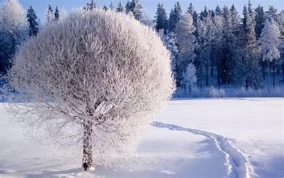 Winter Wallpapers Nature Pixelstalk