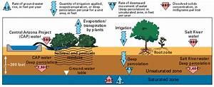 Salinity Effects On Plant Growth