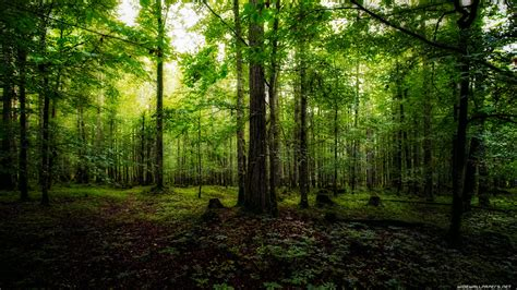 Green Forest Photo Hd by 47 Green Forest Wallpaper Hd On Wallpapersafari