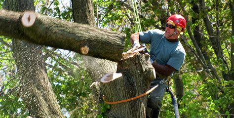 Local Tree Removal Business Services