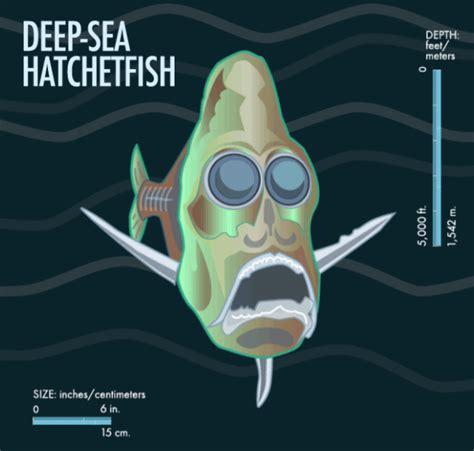 deep sea hatchetfish  weird creatures