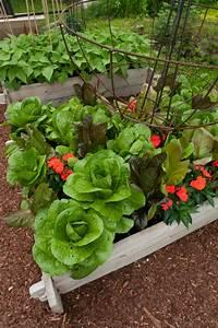 A Salad Lover39s Garden Ellen Ecker Ogden
