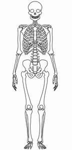 Body Diagram Of Skeletal System