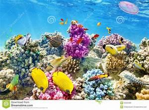 Bilder Mit Fischen : unterwasserwelt mit korallen und tropischen fischen stockfoto bild 52503483 ~ Frokenaadalensverden.com Haus und Dekorationen