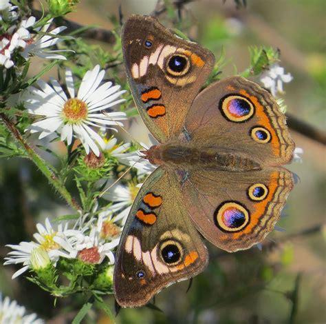 conoce las  mariposas mas hermosas del mundo parecen