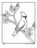 Blossom Coloring Apple Cherry Branch Line Drawing Bird Adults Sheet Tree Colouring Japan Getdrawings Printer Send Button Special Wickedbabesblog sketch template