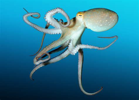 Jahresthema Kraken Und Konsorten