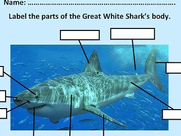 ks  label  parts   great white shark