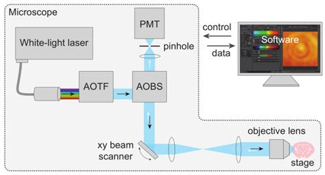 Spectral Reflectometric Microscopy on Myelinated Axons In ...