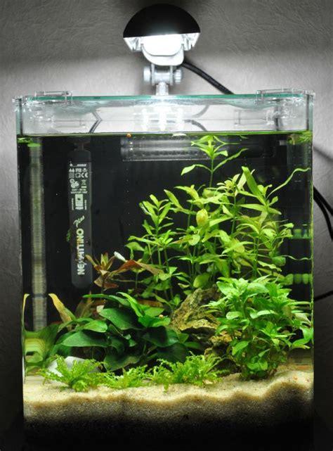 quel aquarium pour un combattant aquarium pour un combattant aquariophilie org