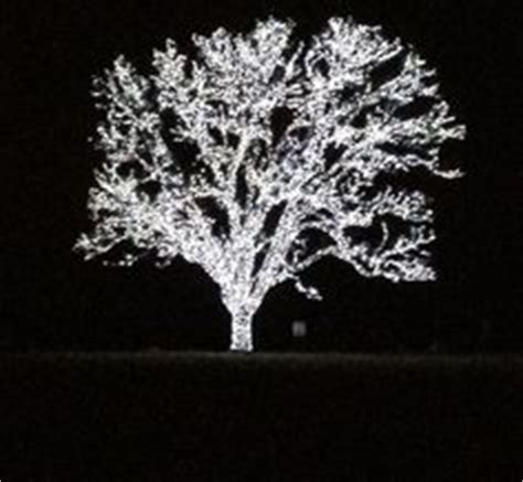 christmas trees in flower mound tx beautiful tree in flower mound it is lit up every call me for directions on