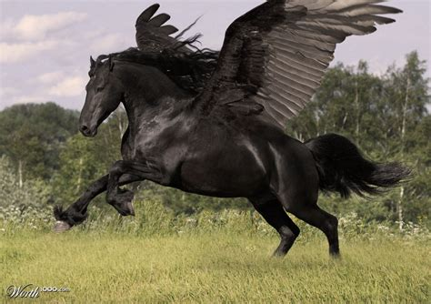 pegasus horse wings unicorns pegasi hippocampi winged animal photoshop they oh hellhounds horses flying 10th entry place stallion contests reality