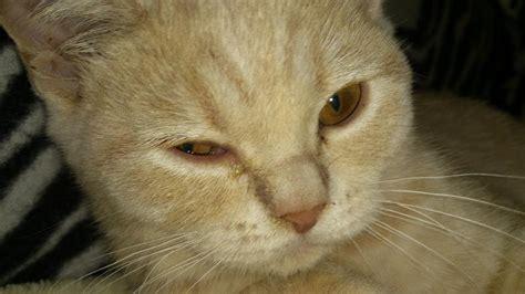 wichtig  wochen alte kitten haben bindehautentzuendung