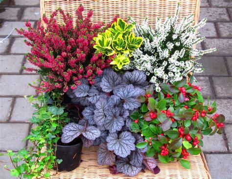 balkonpflanzen set pflanzen versand harros pflanzenwelt