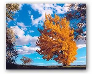 Quoi Planter En Automne : planter un arbre pour sauver l environnement les ~ Melissatoandfro.com Idées de Décoration