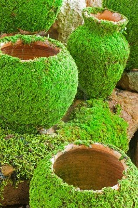 grow moss on rocks reubens lawn care how to make your own moss landscape