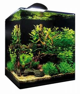 Dennerle Nano Cube 60 Complete Plus : 60 liter aquarium fische 1000 aquarium ideas ~ Frokenaadalensverden.com Haus und Dekorationen