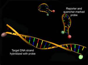 Real-Time Polymerase Chain Reaction