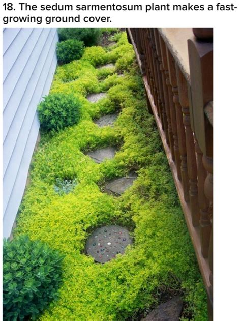 fast growing ground cover 117 best images about yard on pinterest gardens hedges and thymus serpyllum