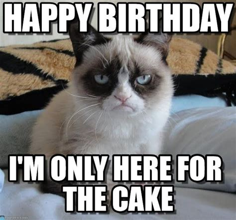 Happy Birthday Meme Cat - grumpy cat birthday grumpy cat happy birthday i m only here for the cake by anonymous