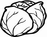 Lettuce Coloring Categories sketch template