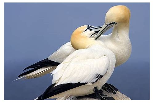 Beautiful Love Birds Images Download