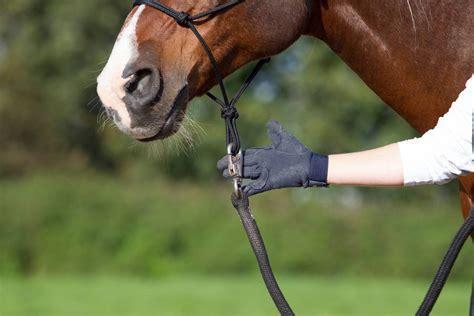 Bist Du Ein Pferdekenner?