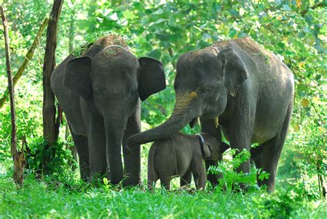 gajah sumatera tewas  kawasan hti