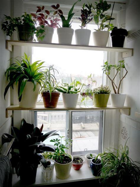 Plant Window by Best 25 Window Shelves Ideas On Plant Window