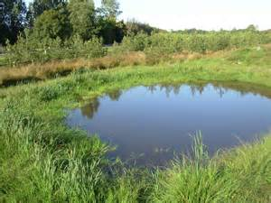 other artificial lakes and ponds habitat ecolandscapes landscaping with species
