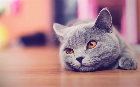 Download Free 100 Cute And Sweet Cat Wallpaper The