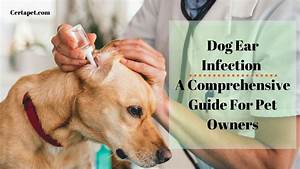 Dog Ear Infection: A Comprehensive Guide For Pet Owners ...