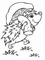 Hedgehog Coloring Animals Printable Animal Hedgehogs Sheets Bestcoloringpagesforkids sketch template