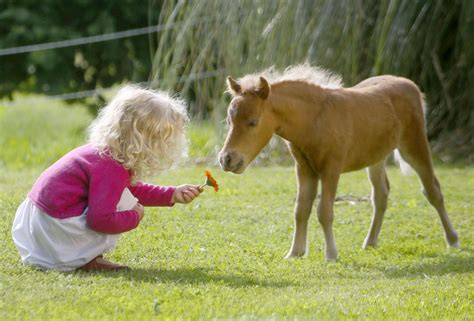 horse inches smallest tall bluey worlds tiniest believed strip caters ross jeff thought