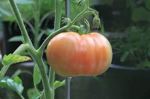Tomaten Selber Anbauen : tomaten selber anbauen tipps f rs erntegl ck stadtlandflair ~ Orissabook.com Haus und Dekorationen